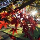 fs autumn 13