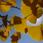 fs autumn 5