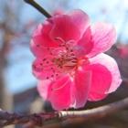 fs spring 2