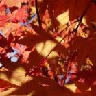 fs autumn 3