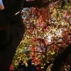 fs autumn 4