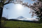 View from Fuji Sanctuary in spring