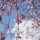fs spring 4