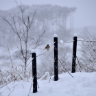 fs winter 15