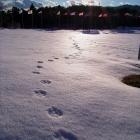 fs winter 9