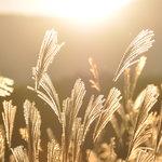 photo gallery autumn
