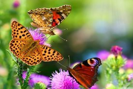 rsz_rsz_infinite_life_butterfly
