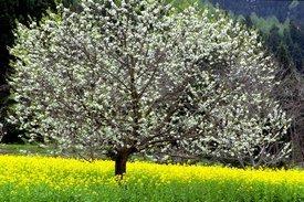 rsz_rsz_tree