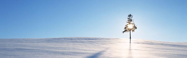 snow-field-tree