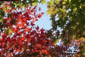 autumn-2017